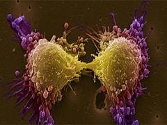 2a cancer-240